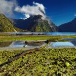 Новая Зеландия: лучшие стартапы 2016-2017 годов