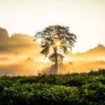 Зачем нужны стартапы в экваториальных лесах