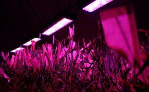 Новая аграрная технология защитит от рака