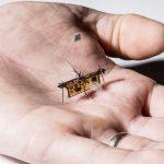 Робот-муха заряжается с помощью лазера