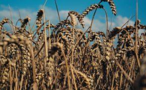 В России придумали Uber для торговли зерном