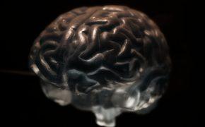 Ученые нашли способ бороться с раком мозга