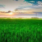 Рисовые поля в Камбодже переведут на блокчейн