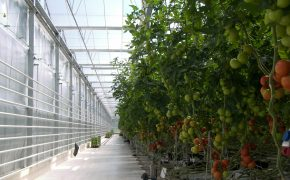 Лучшая инвестновость дня: В Нижегородской области создадут овощной комплекс