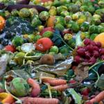 Лучшая инвестновость дня: Под Рязанью запустят крупное производство овощей