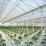 Лучшая инвестновость дня: Под Липецком построят крупный тепличный комплекс