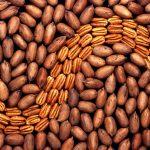 Посол Мексики: «Наша цель — увеличение экспорта ореха пекан»
