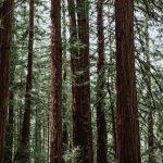 Где быстрее восстанавливают леса?