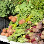 Лучшая инвестновость дня: В Татарстане будут производить инновационный субстрат для растений