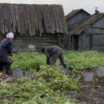 Министр посоветовала малоимущим заняться огородом