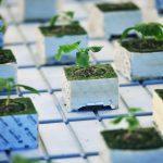 Ученые вывели растение-киборга