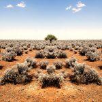 Бизнес австралийских аборигенов растет быстрее рынка