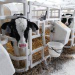 Ферма с роботами появилась в Вологодской области