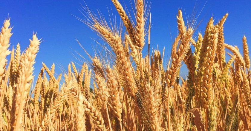 Россия перестала поставлять зерно в Ирак