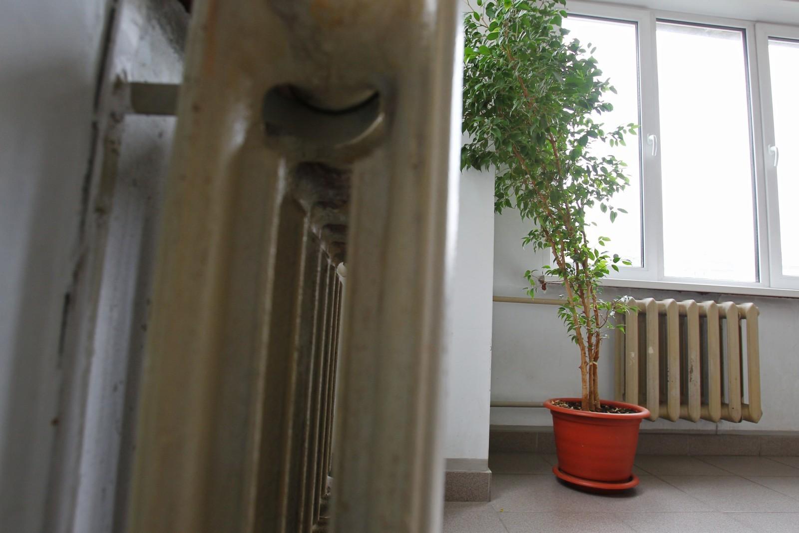 Деревце в кадке у батареи в московской квартире. Отопительный сезон в Москве начался 13 сентября. Мария Девахина / РИА Новости